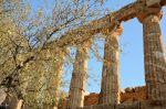 SCIACCA-valle-dei-templi-3